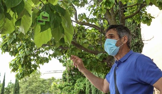 Texto Alternativo: El Ayuntamiento coloca cerca de 200.000 insectos beneficiosos en 800 árboles de la ciudad para seguir realizando control biológico de plagas